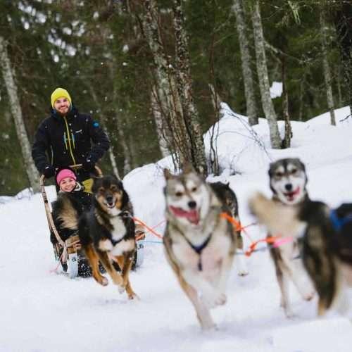 Winter husky ride