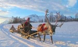 Reindeer safari in old fashioned style