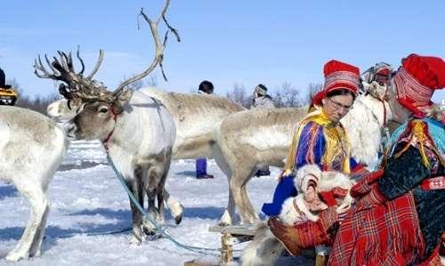 Reindeer safari in Iso-Syöte