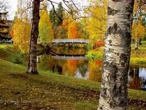 Lapland trees